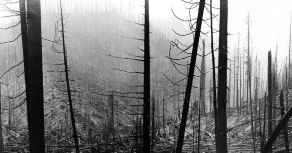 forest4381543815.tif