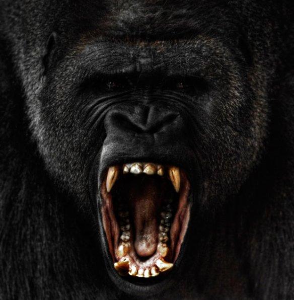 angry-gorilla_2042055i